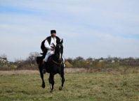 epona horse land