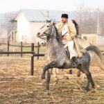epona horse land bobicesti 4
