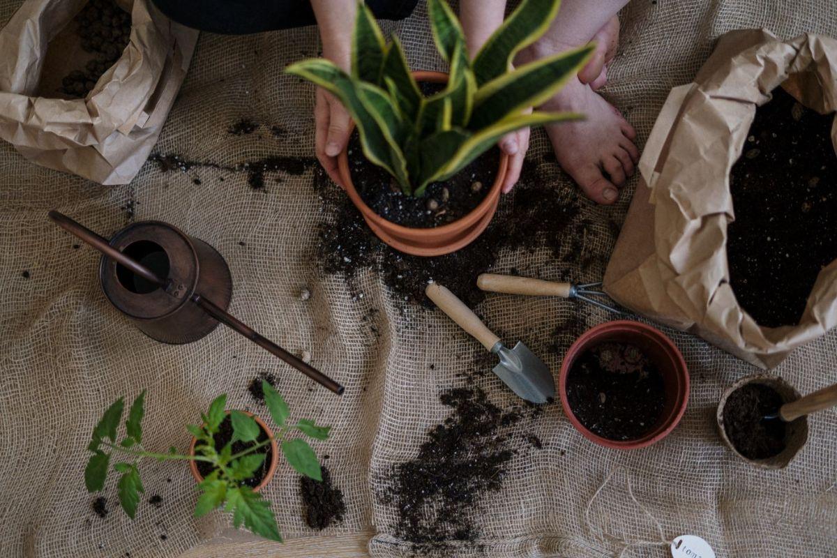 COVER 3 motive pentru care să petreci mai mult timp în propria grădină
